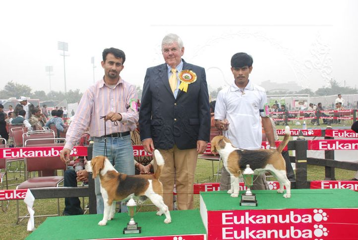 beagle,, Gurgaon Dog Show Day1, DogSpot.in