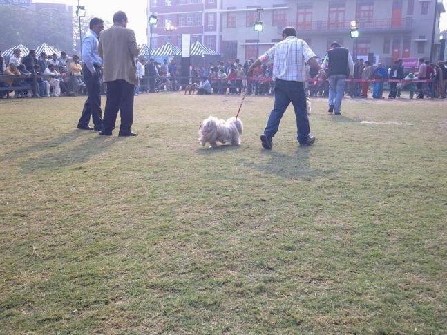 Gurgaon Dog Show,, Gurgaon Dog Show, DogSpot.in