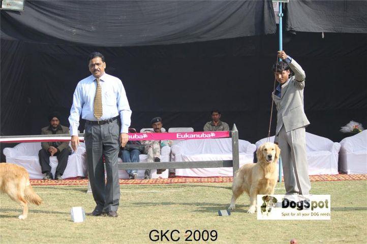 Golden,, Gurgaon Dog Show, DogSpot.in