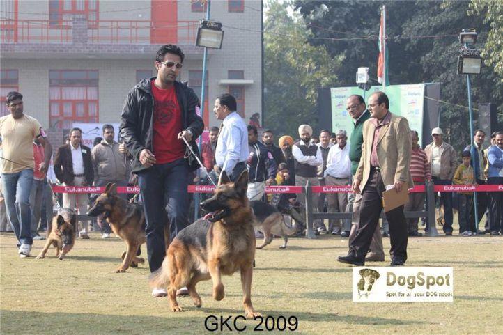 GSD,Yako Von Noort,, Gurgaon Dog Show, DogSpot.in