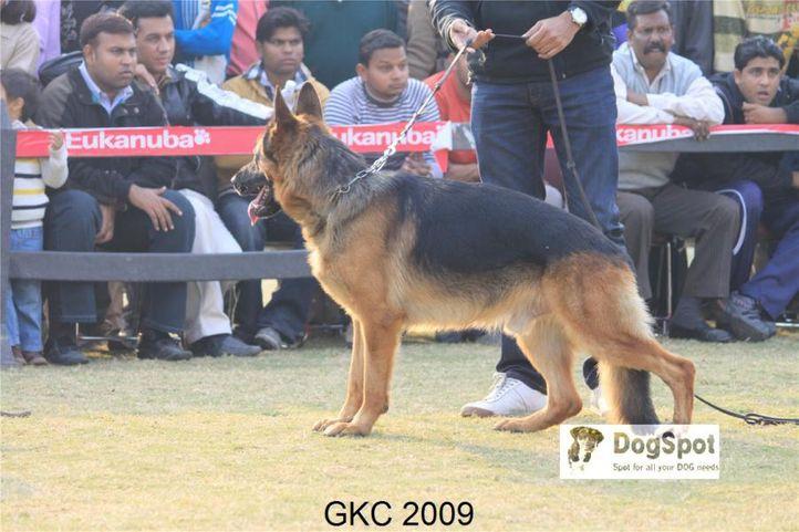 GSD,, Gurgaon Dog Show, DogSpot.in