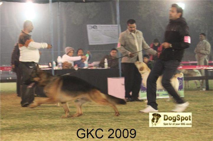 GSD,Yako Von Noort, Lineup, Gurgaon Dog Show, DogSpot.in