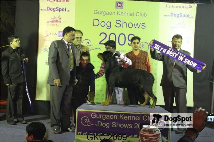 Lineup, Rottweiler, , Gurgaon Dog Show, DogSpot.in