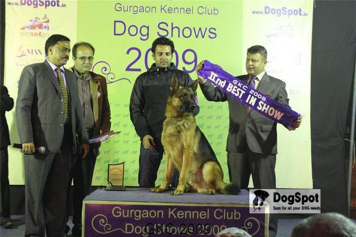 GSD, Lineup, Gurgaon Dog Show, DogSpot.in
