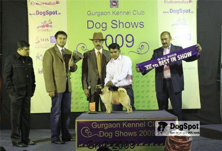 Lineup, Doberman, Taaurus, Gurgaon Dog Show, DogSpot.in