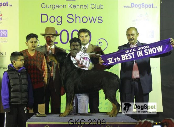 Lineup, Rottweiler, Gurgaon Dog Show, DogSpot.in