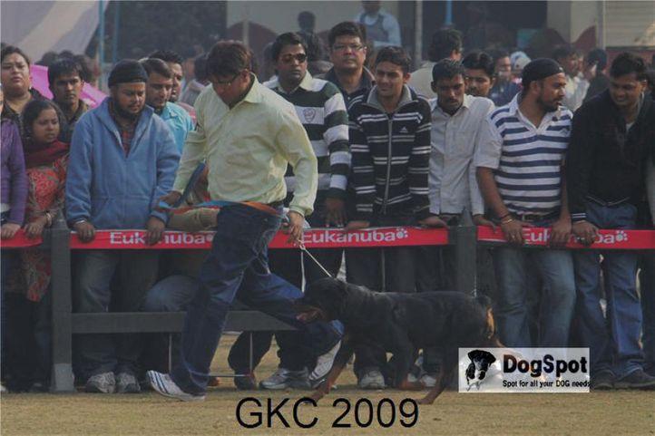 Rottweiler,, Gurgaon Dog Show, DogSpot.in
