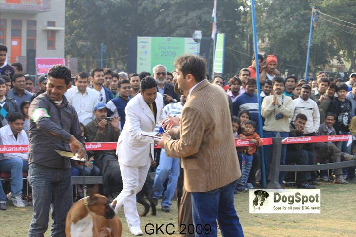 Boxer, Doberman,Taaurus,, Gurgaon Dog Show, DogSpot.in