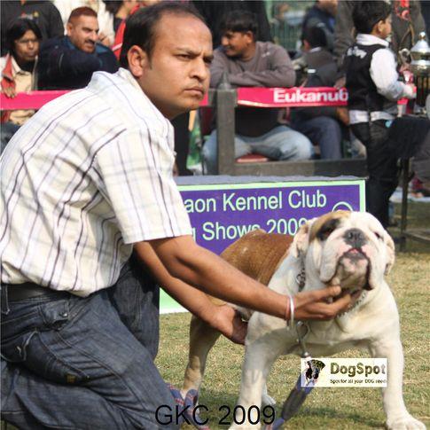 BullDog,, Gurgaon Dog Show, DogSpot.in