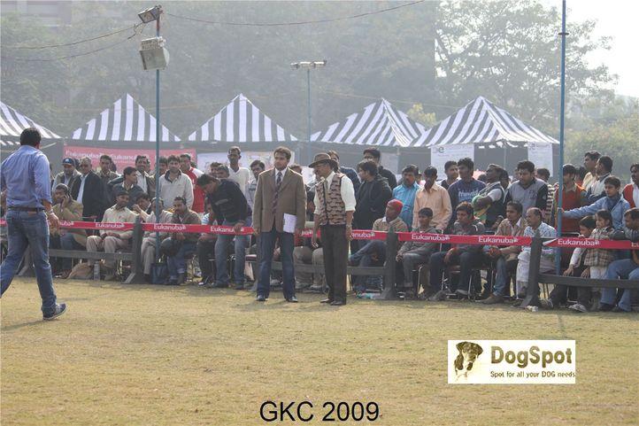Judge,Judging,, Gurgaon Dog Show, DogSpot.in
