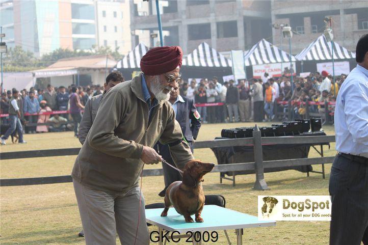 dachshund,, Gurgaon Dog Show, DogSpot.in