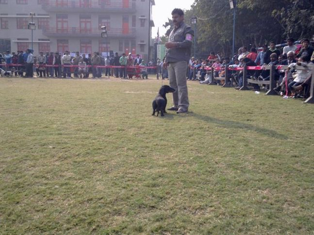 Gurgaon Dog Show,, Gurgaon Dog Show, DogSpot.in