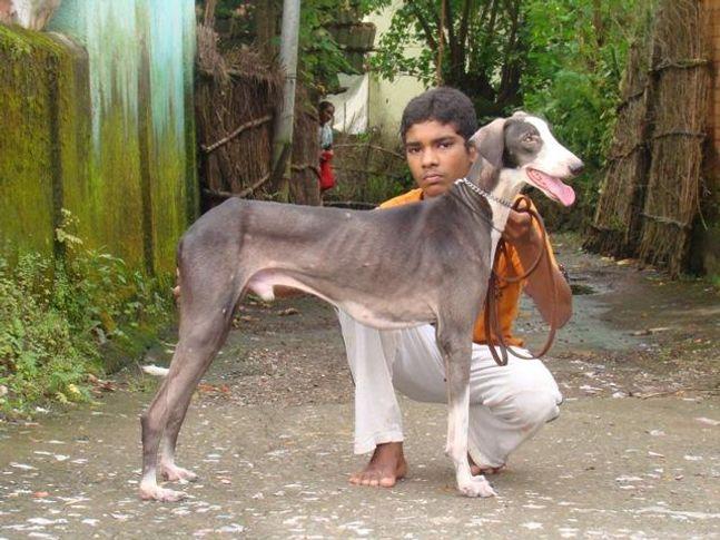 guru  surya, Guru & Surya, DogSpot.in