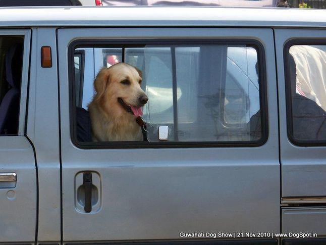 golden,ground,sw-9,, Guwahati Dog Show, DogSpot.in