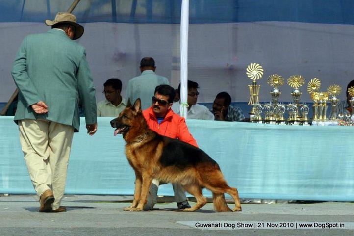 ex-145,gsd,sw-9,, BOB VON DER GRAFENBURG, German Shepherd Dog, DogSpot.in