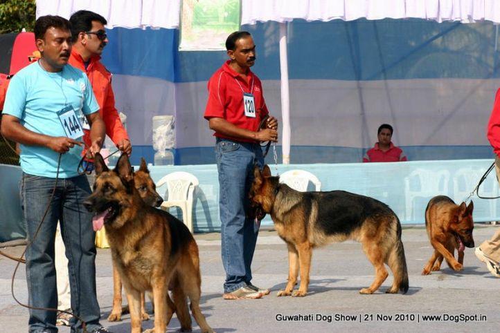 gsd,sw-9,, Guwahati Dog Show, DogSpot.in