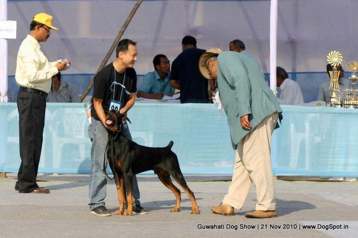 doberman,sw-9,, Guwahati Dog Show, DogSpot.in