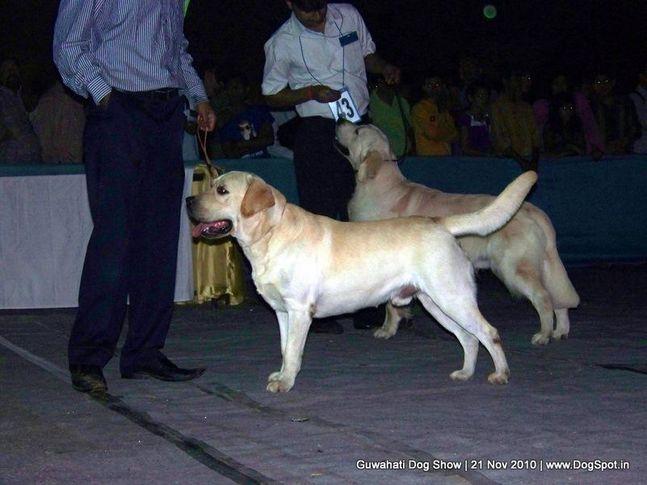 ex-71,labrador,sw-9,, MULTI BPIS CH. PINK PANTHER OF SUNNYLAND, Labrador Retriever, DogSpot.in