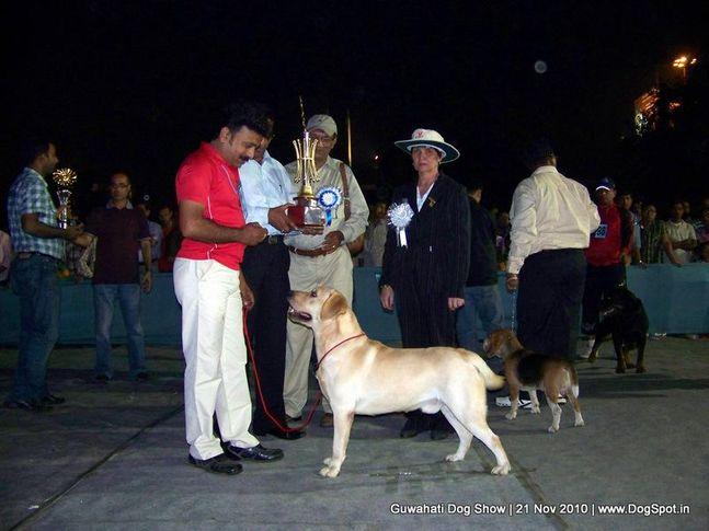 ex-72,labrador,sw-9,, BIS CH. NEW MAN GORSKA FANTAZJA, Labrador Retriever, DogSpot.in