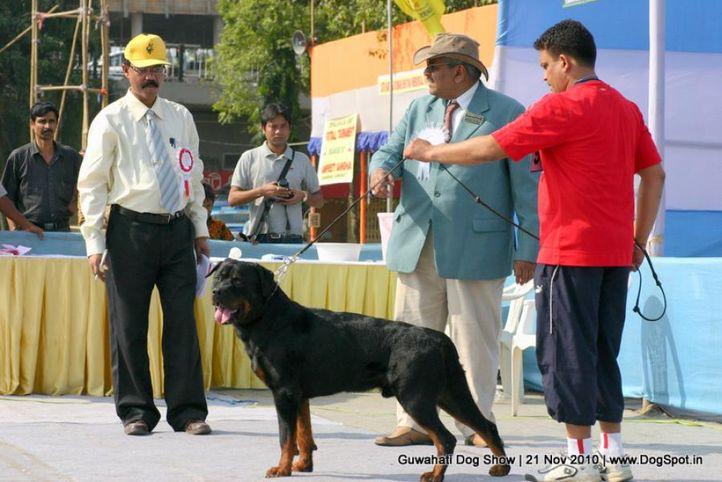 ex-98,rottweiler,sw-9,, SANTOS SCHWARZ ROTT GARDE, Rottweiler, DogSpot.in