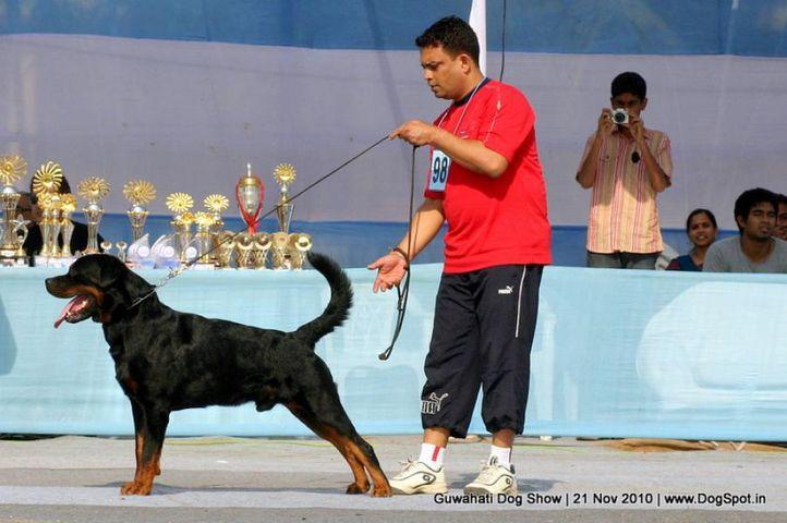 ex-98,sw-9, rottweiler, SANTOS SCHWARZ ROTT GARDE, Rottweiler, DogSpot.in