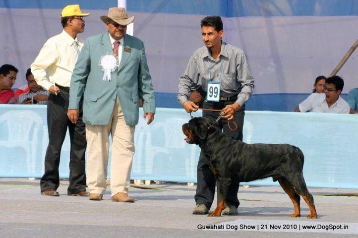ex-99,sw-9,rottweiler, SUMALIK'S MOONLIGHT, Rottweiler, DogSpot.in