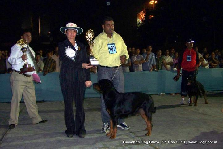 ex-107,sw-9,rottweiler, SHURVEER'S JEANS ASJOHN STEEL, Rottweiler, DogSpot.in