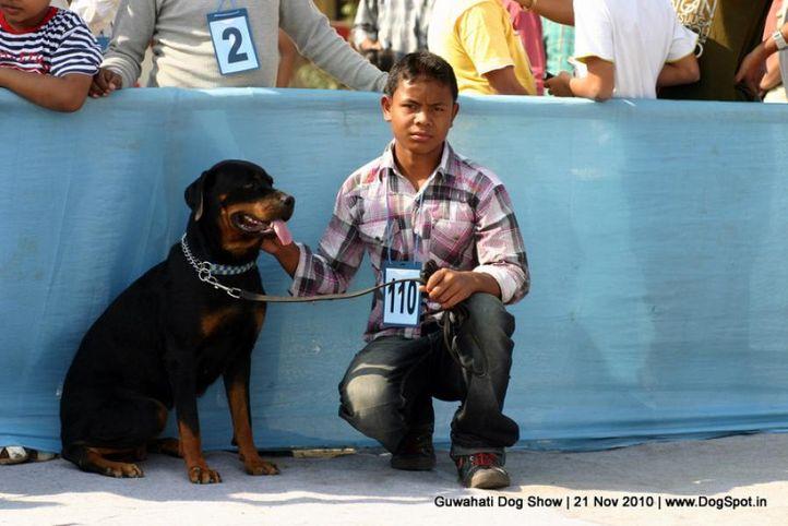 ex-110,sw-9,rottweiler, LAVENYA, Rottweiler, DogSpot.in