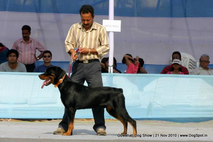 sw-9,rottweiler, Guwahati Dog Show, DogSpot.in