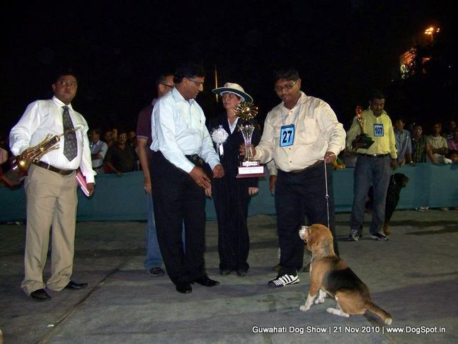 beagle,ex-27,sw-9,, RELIABLES GOLDY, Beagle, DogSpot.in