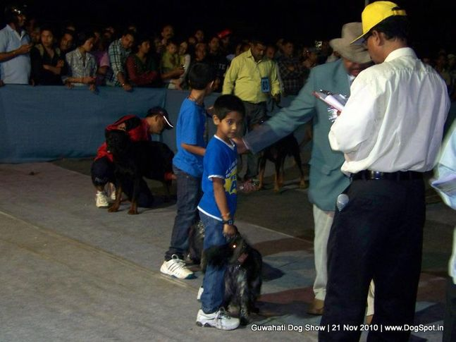 child,sw-9,, Guwahati Dog Show, DogSpot.in