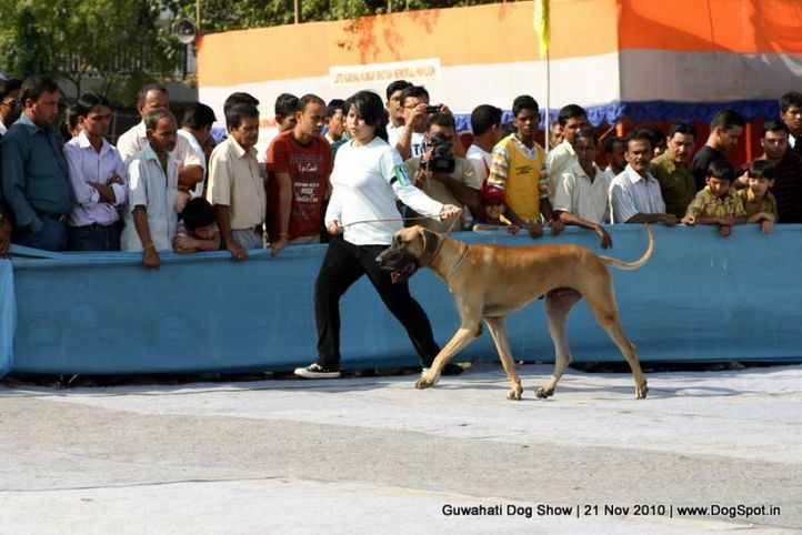 ex-150,great dane,sw-9,, Guwahati Dog Show, DogSpot.in