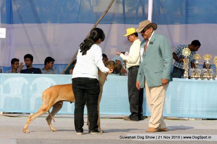 great dane,sw-9,, Guwahati Dog Show, DogSpot.in