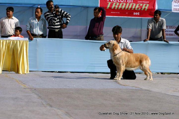 golden,sw-9,, Guwahati Dog Show, DogSpot.in