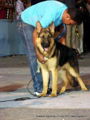 ex-119,gsd,sw-9,, OREGON EGERSTAL, German Shepherd Dog, DogSpot.in