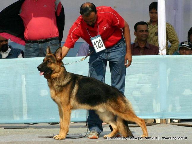 ex-120,gsd,sw-9,, BRAVO BOGHAUS, German Shepherd Dog, DogSpot.in