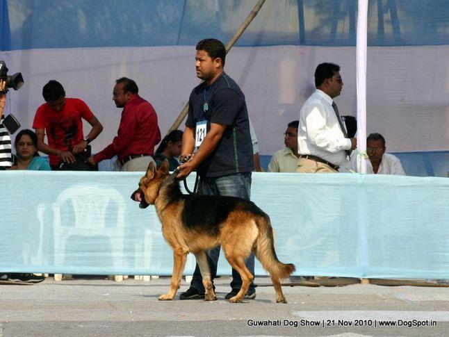 ex-121,gsd,sw-9,, RONI, German Shepherd Dog, DogSpot.in