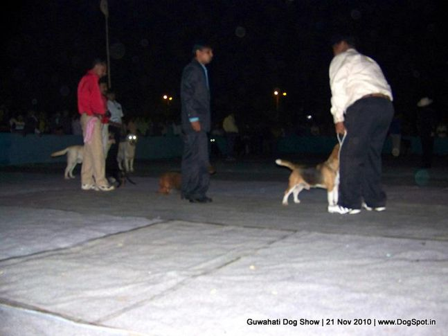sw-9,, Guwahati Dog Show, DogSpot.in