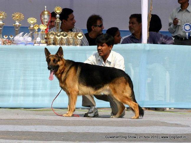 ex-122,gsd,sw-9,, ROMEO, German Shepherd Dog, DogSpot.in