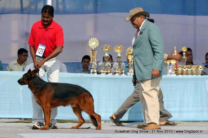 ex-125,gsd,judges,sw-9,, BLACK BERRY, German Shepherd Dog, DogSpot.in