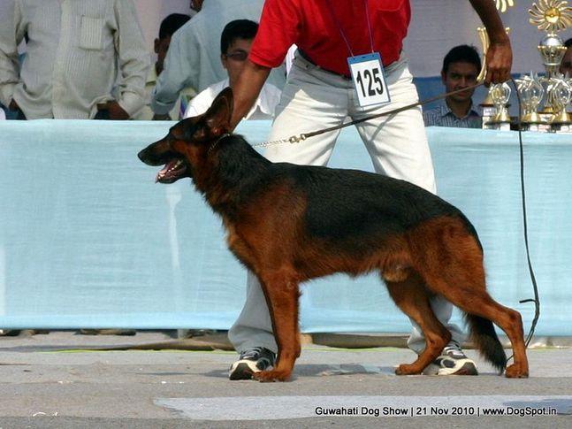 ex-125,gsd,sw-9,, BLACK BERRY, German Shepherd Dog, DogSpot.in