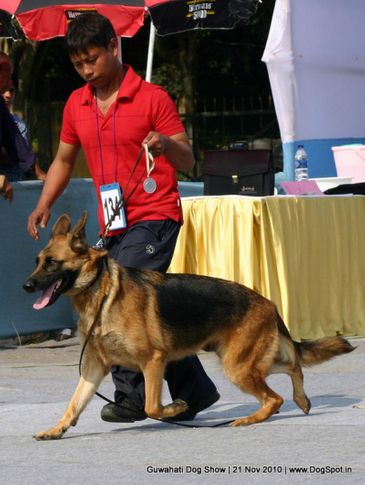 ex-134,gsd,sw-9,, GERSHEP'S ELIZABETH, German Shepherd Dog, DogSpot.in