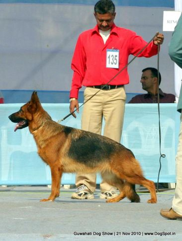 ex-135,gsd,sw-9,, KRONA, German Shepherd Dog, DogSpot.in