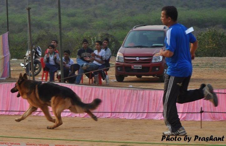 gwalior show pics 2011, gwalior show pics 2011, DogSpot.in