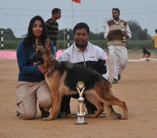 gwalior show pics 2011, gwalior show pics 2011, DogSpot.in