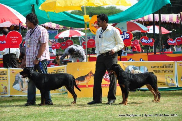 rottweiler,, Hycan 2010, DogSpot.in