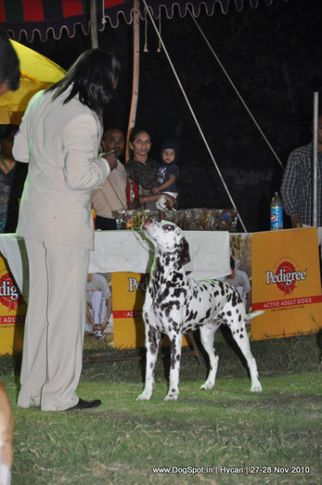 dalmatian,, Hycan 2010, DogSpot.in