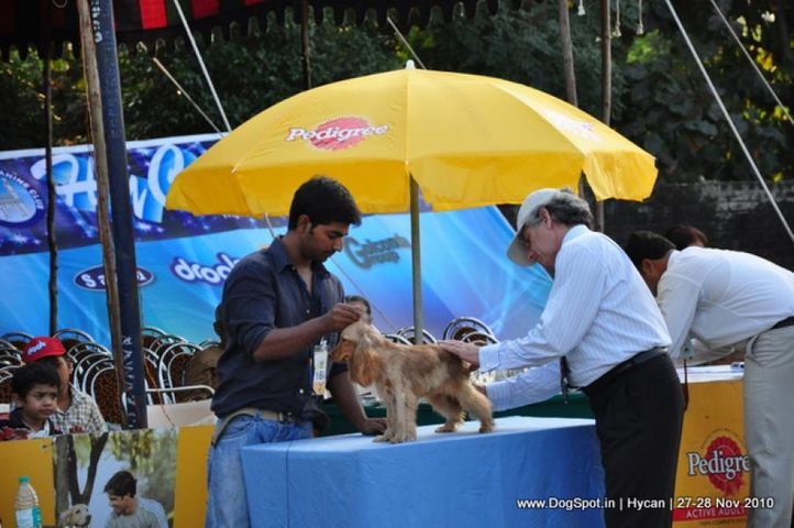 cocker,, Hycan 2010, DogSpot.in