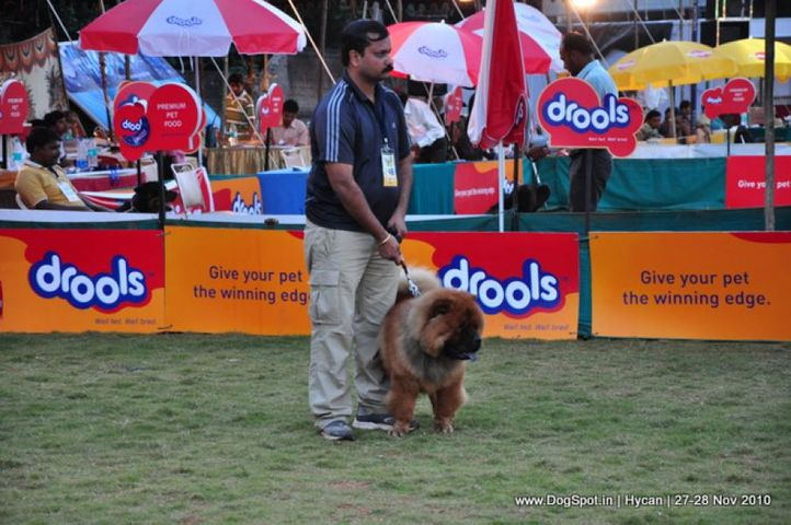chow chow,, Hycan 2010, DogSpot.in