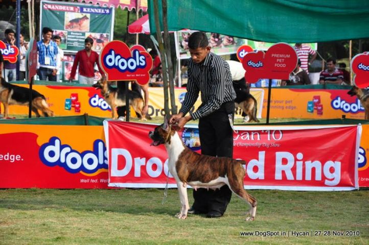boxer,, Hycan 2010, DogSpot.in